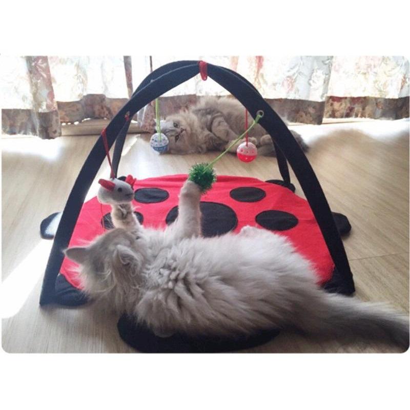 tapis-de-jeu-coccinelle-pour-chat-photo2.jpg