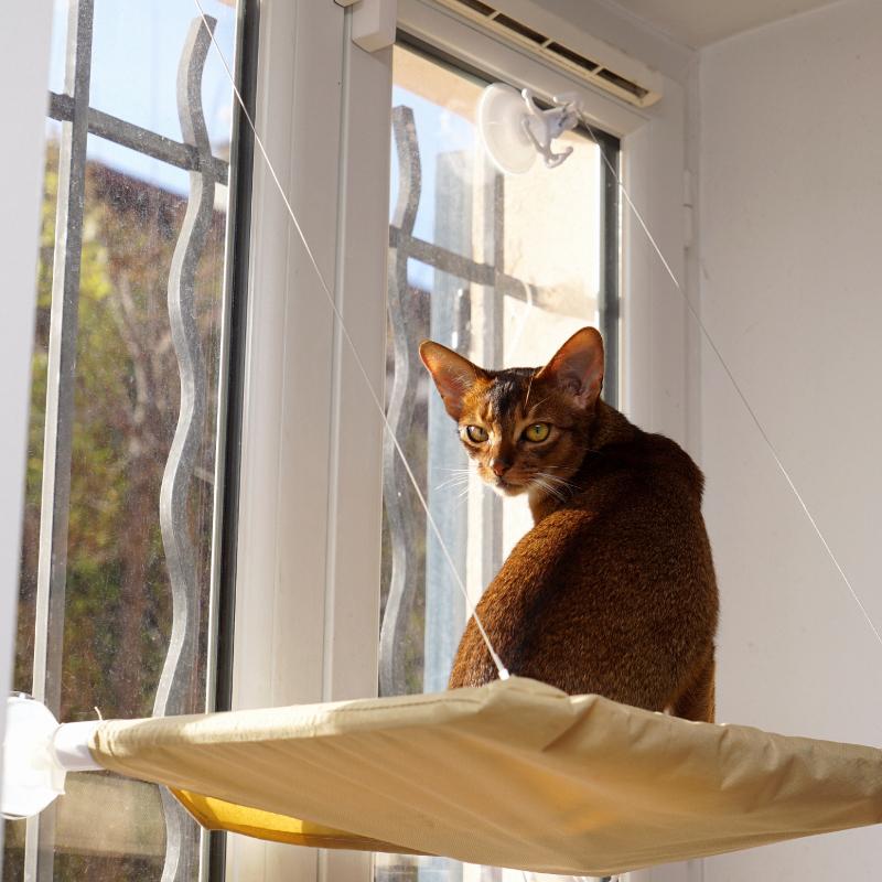 Hamac De Fenêtre Pour Chat Mon Chat Adoré